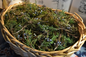 Freshly collected Juniperus virginiana boughs & berries